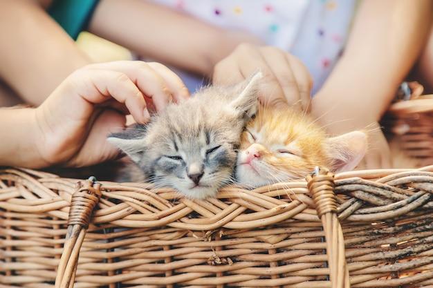 Gatinhos nas mãos de crianças