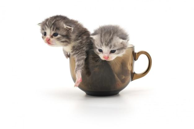 Gatinhos no copo isolado