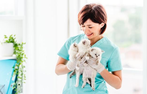 Gatinhos ragdoll na clínica veterinária