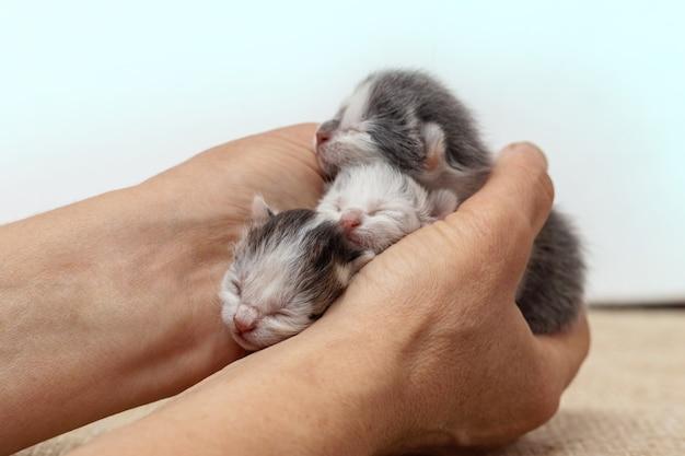 Gatinhos recém-nascidos nas mãos de uma mulher