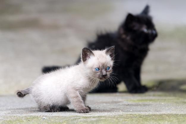 Gatinhos recém-nascidos pretos e cinzentos ao ar livre.