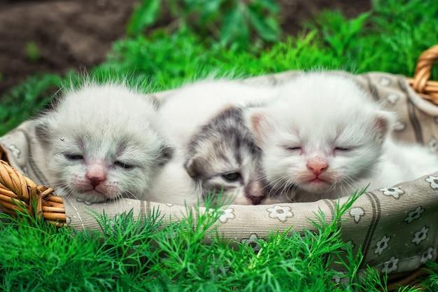 Gatinhos recém-nascidos