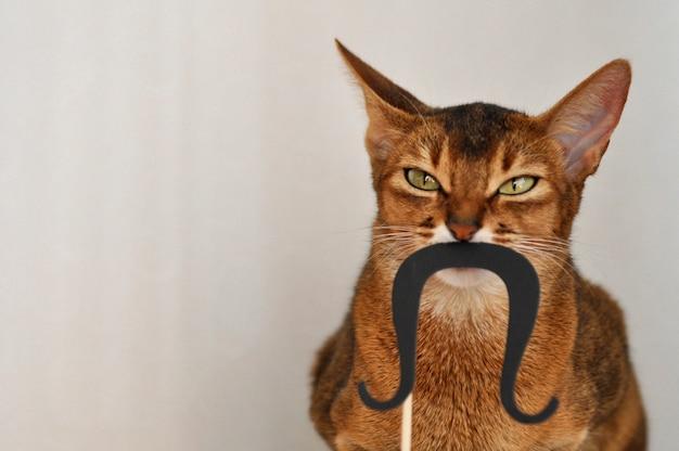 Gato abissínio com um bigode de papel em um fundo branco
