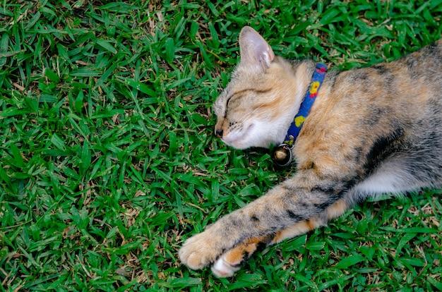 Gato adorável bonito da cor do leopardo que dorme na grama.