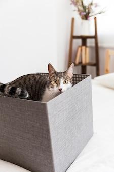 Gato adorável dentro da caixa