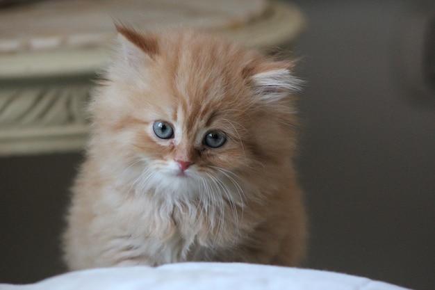 Gato adorável