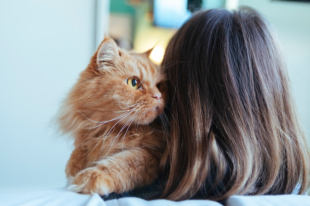 Gato adotado feliz com novo proprietário