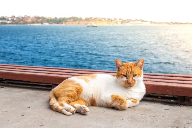 Gato adulto com manchas vermelhas deitado à beira-mar, descansando ao sol