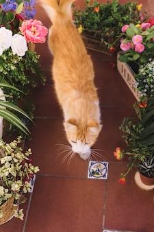 Gato andando entre as plantas