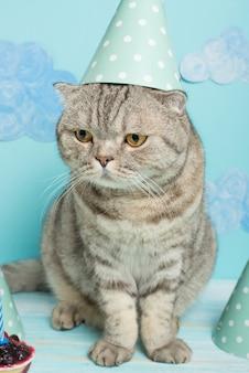 Gato aniversariante, parabéns pelo feriado