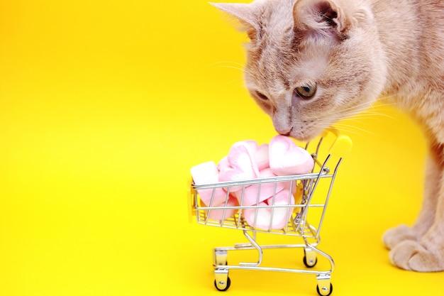 Gato ao lado de um carrinho de brinquedo do supermercado cheio de marshmallows