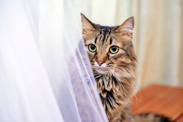 Gato ao lado do vestido de noiva