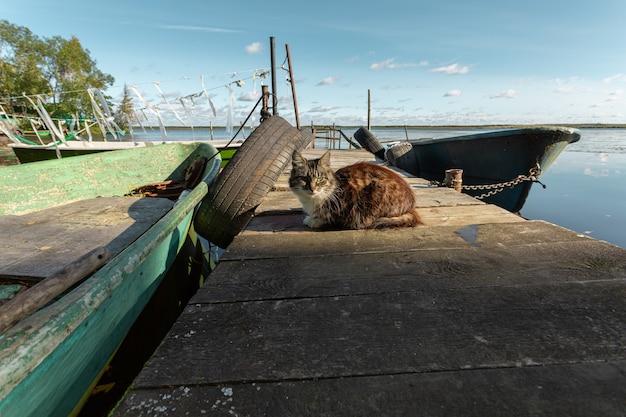 Gato aproveitando o sol no cais da vila de pescadores na rússia no início do outono.