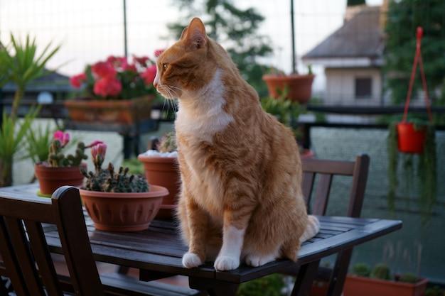 Gato assistindo o pôr do sol no terraço