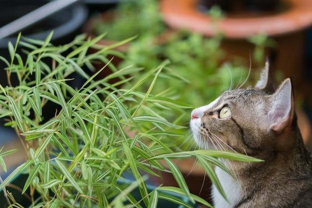 Gato bonito ao ar livre