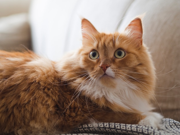 Gato bonito assustado, sentado no sofá