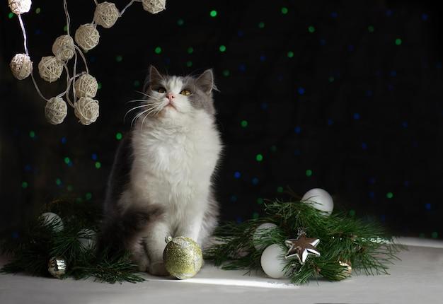 Gato bonito com brinquedos de natal e guirlandas.