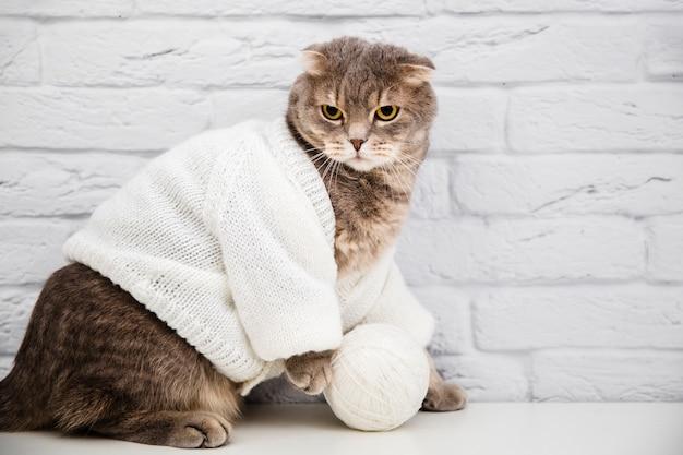 Gato bonito com suéter de lã