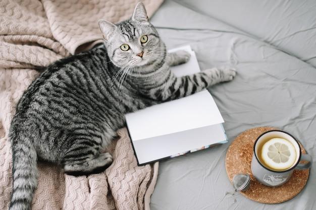Gato bonito deitado na cama com um livro e uma xícara de chá de limão.