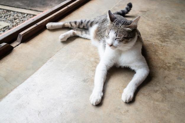 Gato bonito doméstico adormeceu