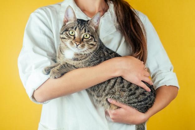 Gato bonito e doméstico nas mãos de um veterinário feminino em um fundo amarelo. conceito de saúde de animais domésticos