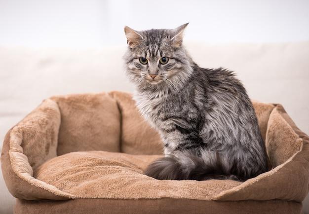 Gato bonito está sentado em sua cama de gato.