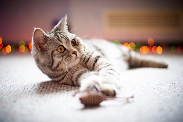 Gato bonito no chão em um fundo borrado com bokeh.