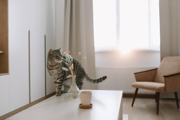 Gato bonito no interior de uma casa aconchegante.