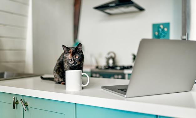 Gato bonito se senta em uma mesa perto de uma xícara de café com um laptop. assistente de trabalho engraçado.