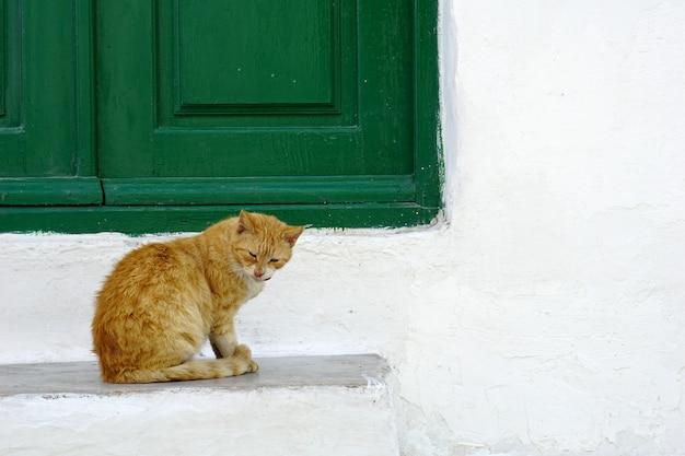 Gato bonito sentado em frente a janela verde e parede branca