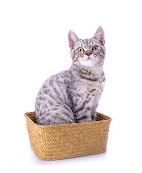 Gato bonito sentar na cesta de madeira.