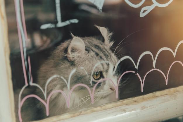 Gato bonito solitário, olhando para fora do tom de cor vintage de windows