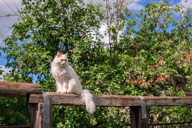 Gato branco ao ar livre desfrute da liberdade da natureza
