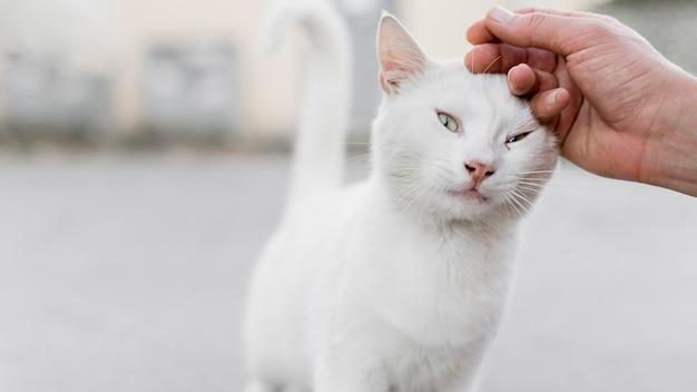 Gato branco de resgate sendo animal de estimação em abrigo de adoção