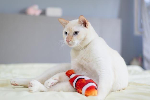 Gato branco deitado na cama