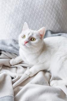 Gato branco deitado no peitoril da janela em casa
