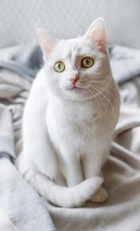 Gato branco deitado no peitoril da janela