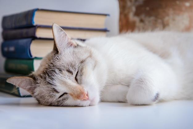 Gato branco dormindo no peitoril da janela