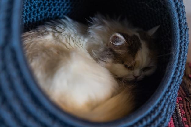 Gato branco e cinza na casa de gatos no chão olhando para a direita
