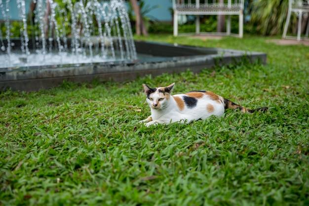 Gato branco na grama de manila no parque.