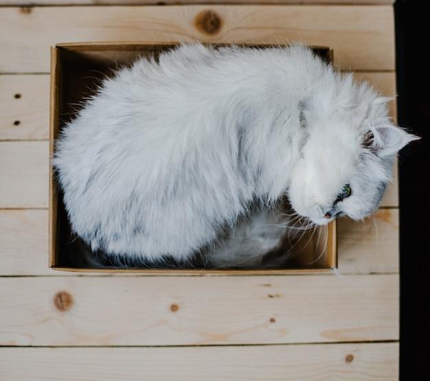 Gato branco repousa em uma caixa