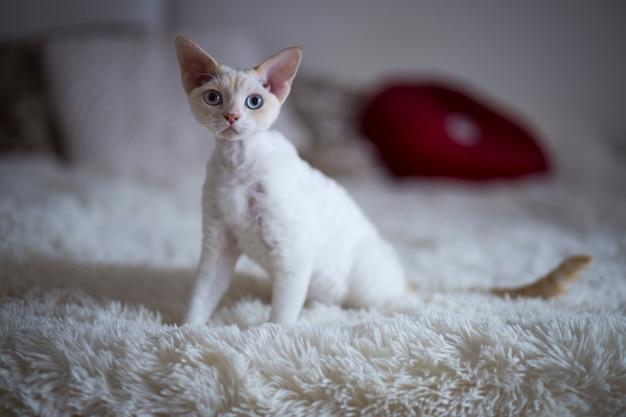 Gato branco sentado na cama no quarto