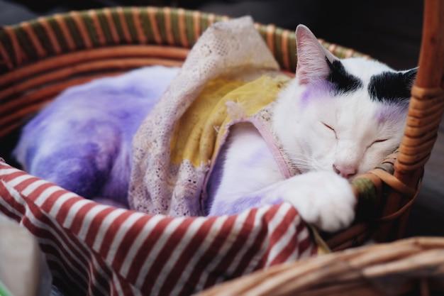 Gato branco tailandês bonito dormindo na cesta de madeira e aplique roxo para tratar doenças de pele do gato.