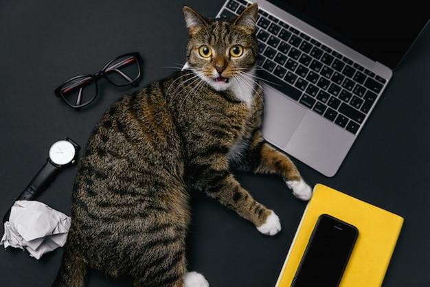 Gato bravo, deitado sobre a mesa do escritório. vista superior da área de trabalho de escritório preto com laptop, notebook, bolas de papel amassado e suprimentos.