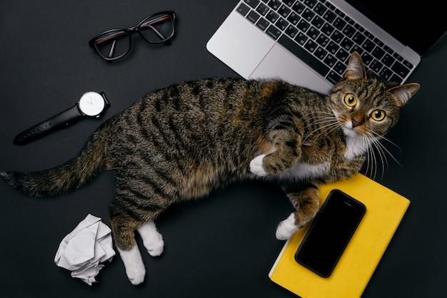 Gato brincalhão engraçado deitado sobre a mesa de escritório. vista superior da área de trabalho de escritório preto com laptop, notebook, bolas de papel amassado e suprimentos.
