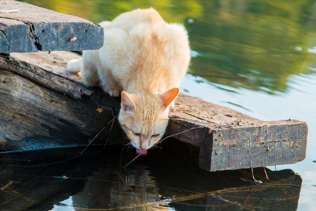 Gato brincando à beira-mar