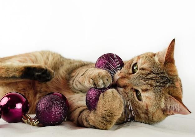 Gato brincando com bolas de natal marrons