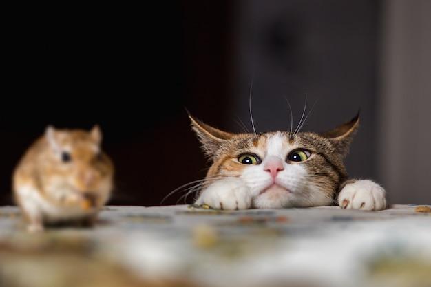 Gato brincando com o pequeno rato gerbil na mesa
