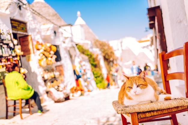 Gato carnudo alaranjado que senta-se em uma cadeira de madeira na porta de uma casa italiana tradicional que sunbathing.