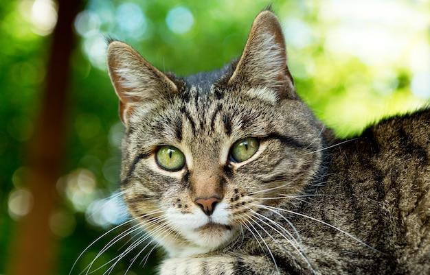 Gato cinza com olhos verdes em fundo verde